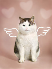 valentine card with fat smiling funny cat