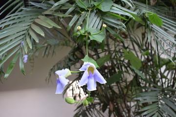Belle orchidee crescono spontanee in Bali, in Indonesia