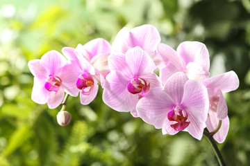 Spoed Fotobehang Orchidee Branch of beautiful pink Phalaenopsis orchid on blurred background, closeup