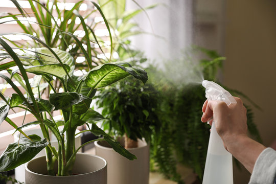Woman spraying plants near window at home, closeup