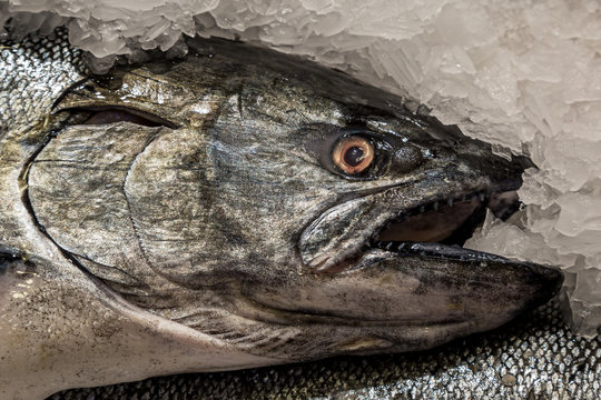 A close up of a salmon for sale on a market stall