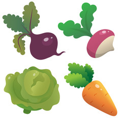 Color images of cartoon cabbage, carrot, beet and radish on white background. Vegetables. Vector illustration set for kids.