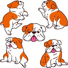 Set of British Bulldog illustrations