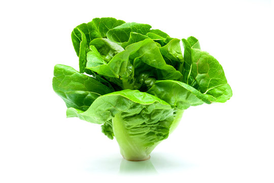 Fresh Butterhead Lettuce isolated on white background.