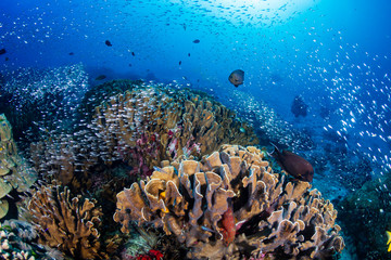 Keuken foto achterwand Koraalriffen Beautiful tropical coral reef at Thailand's Similan Islands in the Andaman Sea