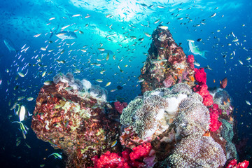 Colorful hard and soft corals on the reef at Richelieu Rock, Thailand