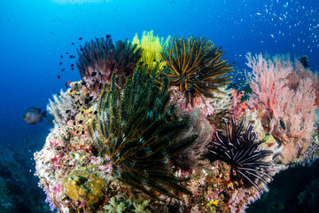 Canvas Prints Under water Beautiful, colorful tropical coral reef at Koh Tachai Island
