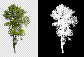 Foto auf Acrylglas Schwarz isolated tree on transperret picture background with clipping path