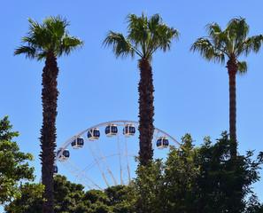 Ferris wheel behind tall palm trees