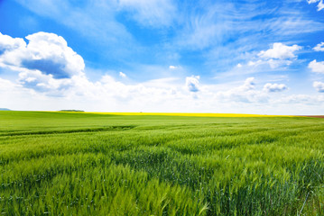 Foto auf Acrylglas Wiesen / Sumpfe Day natural view at German pastures and cornfields under blue cloudy skies spring time