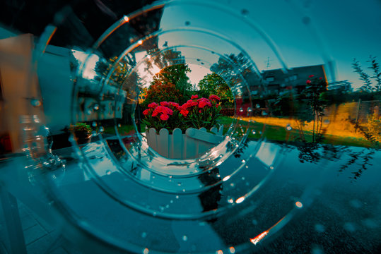 Red flowers in the sundown with glooming water sparkels