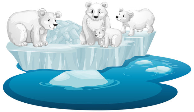 Isolated picture of polar bears on ice