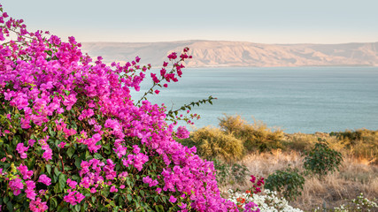 floral background of bougainvillea on the shore of a mountain lake