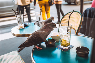 Two pigeons on a table of a street cafe regale themselves with food leftovers