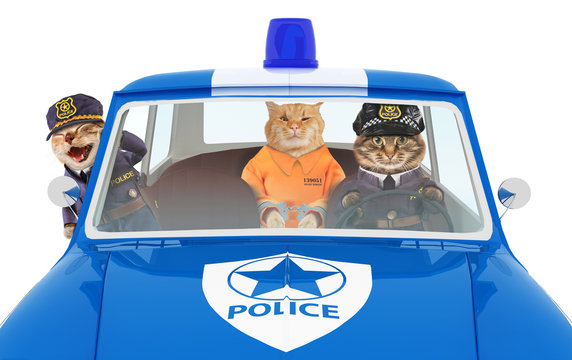 Funny cats are going to the police station. Two policemen and prisoner in orange jumpsuit.