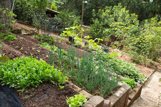 Vegetable garden in the backyard of a home. Cunha-SP, Brazil