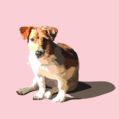 Poster Dogs Portrait of a dog Jack Russell Terrier. The dog is sitting on a light background.