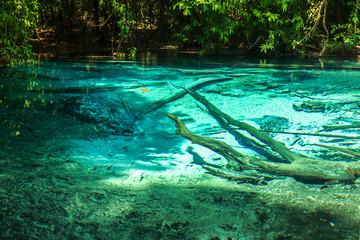 Emerald Pool Krabi rainforest Thailand