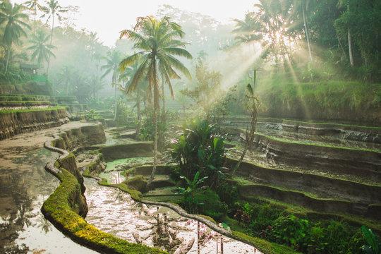 Beautiful sunrise over famous balinese landmark Tegalalang rice terraces. Magic sun rays, amazing light. Welcome to Bali travel concept.