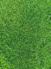 Poster Grass green grass texture background