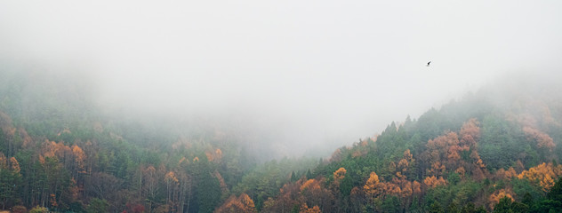 Landscape for cover or Banner background : Fog and Mountain in Morning at Autumn season in Japan.