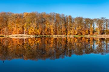 Stiller See im Herbst, Müritz-Nationalpark, bunter Wald spiegelt sich, blauer Himmel