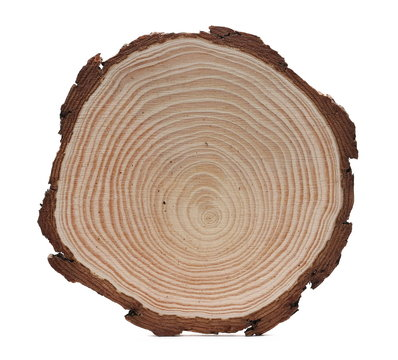 Cross section of tree trunk, stump, isolated on white background