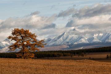 Mountain landscape. Mongolia, Eastern Sayan Mountains. Autumn. Mountain peaks in the snow. Lonely tree on a background of snowy mountains.