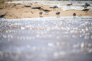 Meeres Vögel