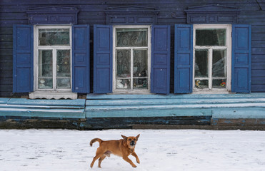 A dog barks as it runs past a wooden house with traditional carved architraves in Blagoveshchensk