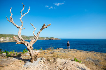 Alone tree against the background of the sea Angel's Billabong in Nusa Penida, Indonesia.
