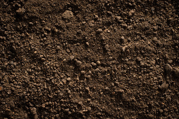Fertile loam soil suitable for planting. Wall mural