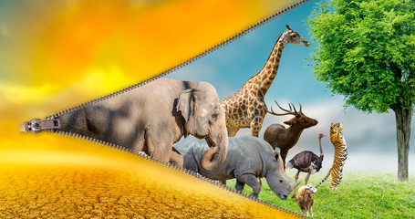 Printed kitchen splashbacks Puma Wildlife Conservation Day Wild animals to the home. Or wildlife protection