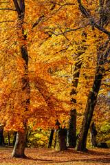 Wall Mural - trees at fall