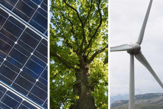 Nachhaltige Energie Collage mit Solarzelle, Windrad und Baum