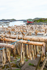 Stockfish hanging up to dry in the Lofoten Islands in Norway