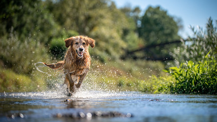 Foto op Plexiglas Hond dog in water