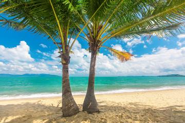 Wall Mural - beach and coconut palm trees. Koh Samui, Thailand