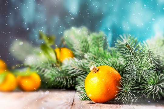 Tangerines and fir tree branches