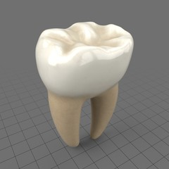 Stylized molar tooth