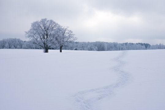 where do you want to go today. lonely path in snow in winter day