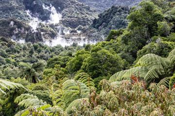 Farne im Rotorua Waimangu Volcanic Valley auf der Nordinsel von Neuseeland