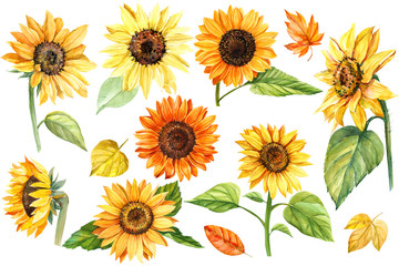 big set, autumn colors, sunflowers on an isolated white background, watercolor illustration, botanical painting