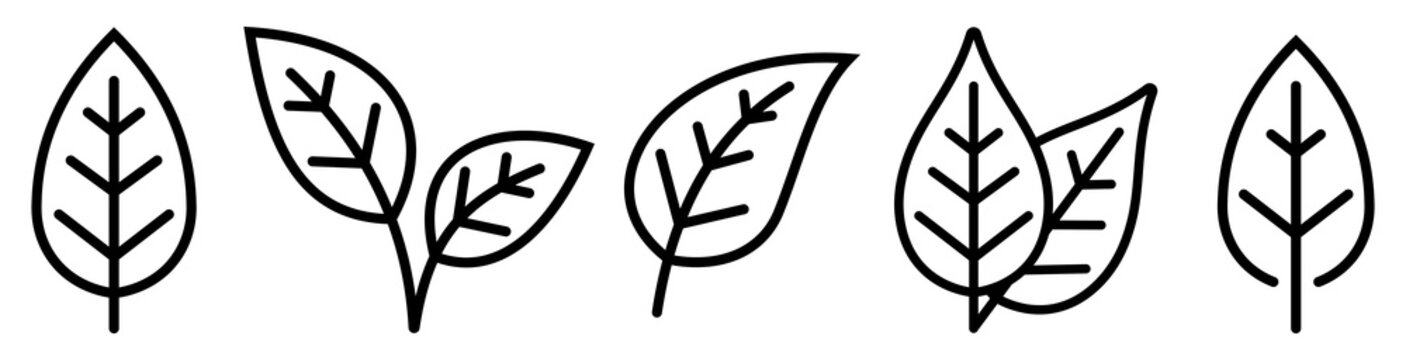 Leaf simple icon set. Vector