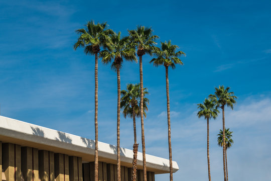 A mid-century modern building and a row of palm trees