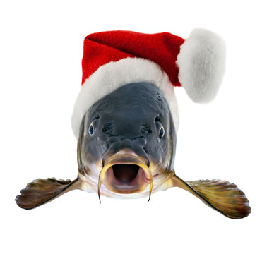 Christmas Czech Carp in Santa Claus red hat concept