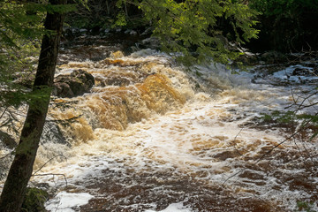 Spring Flood Waters Raging Through a Forest Stream