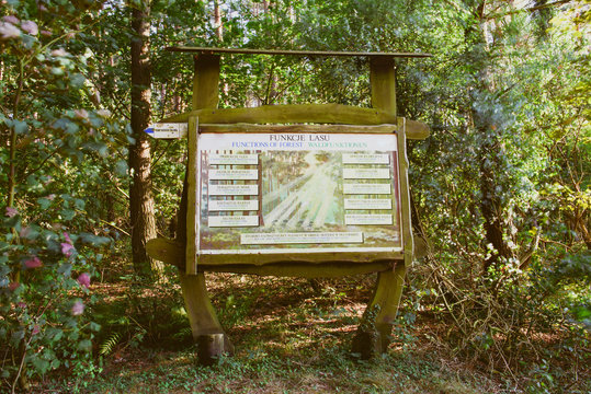 information boards in the forest. copy space. summer time