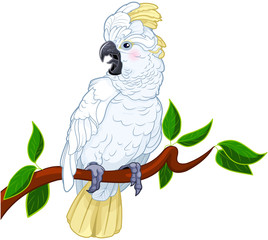 Fotobehang Sprookjeswereld Cockatoo