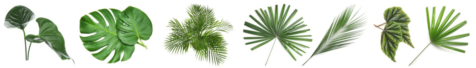 Set of green tropical leaves on white background Fotobehang